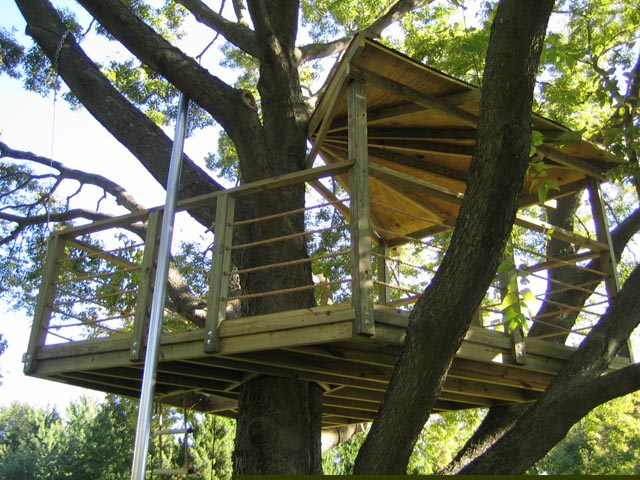 Cook Treehouse